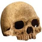 Exo Terra Primate Skull PT 2855