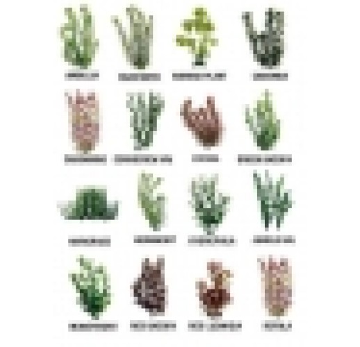 Tetra Plantastics size 3