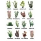 Tetra Plantastics size 5