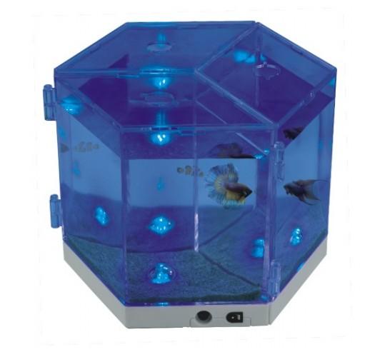 Aquarium betas NA - 3